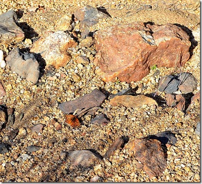 02a Fritillary butterfly Weaver Mts Yarnell AZ
