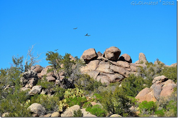 05a Turkey vultures soaring over Weaver Mts Yarnell AZ