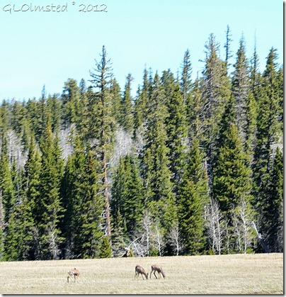 04 Mule deer on the meadows Kaibab NF AZ (988x1024)
