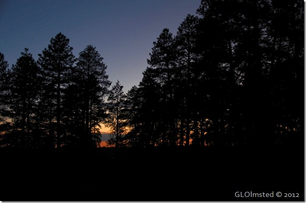 13 Sunset through the pines NR GRCA NP AZ (1024x678)