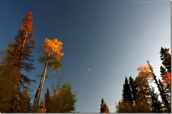 02 Crescent moon hangs over fall colors Kaibab NF AZ (1024x678)