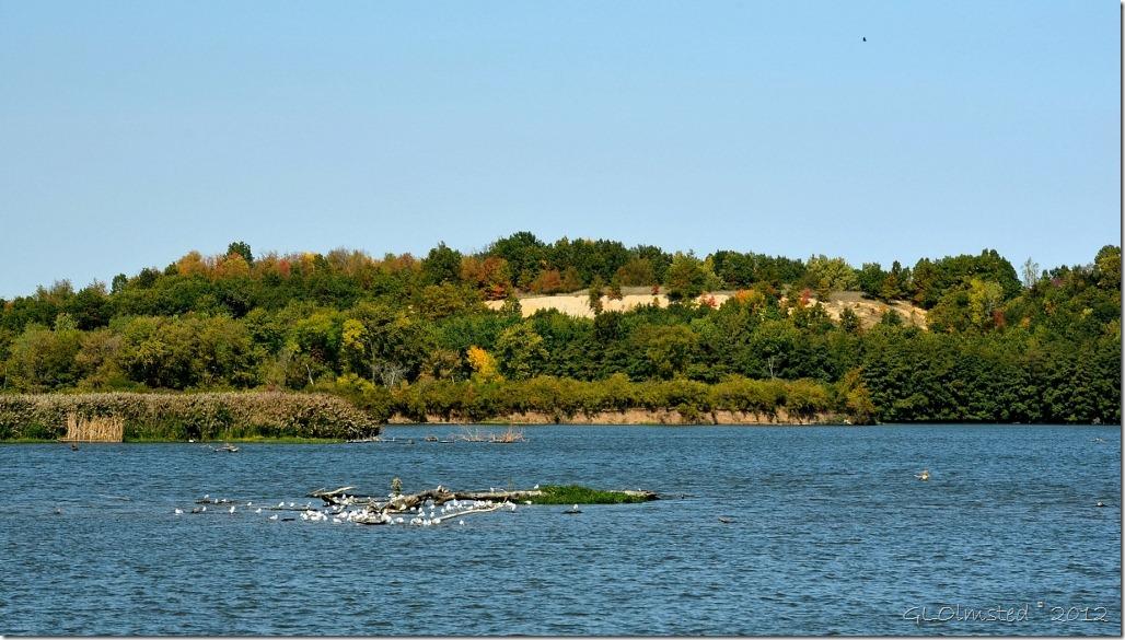 04 Birds on IL River SR71 IL (1024x581)