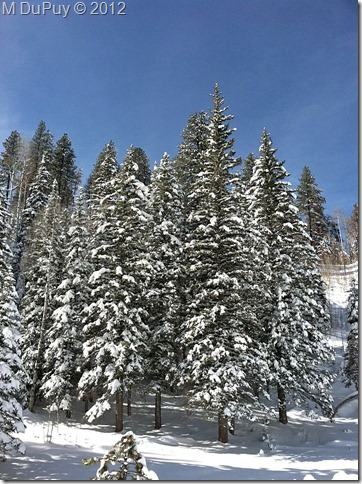 02 Snowy forest NR GRCA NP AZ by Mike