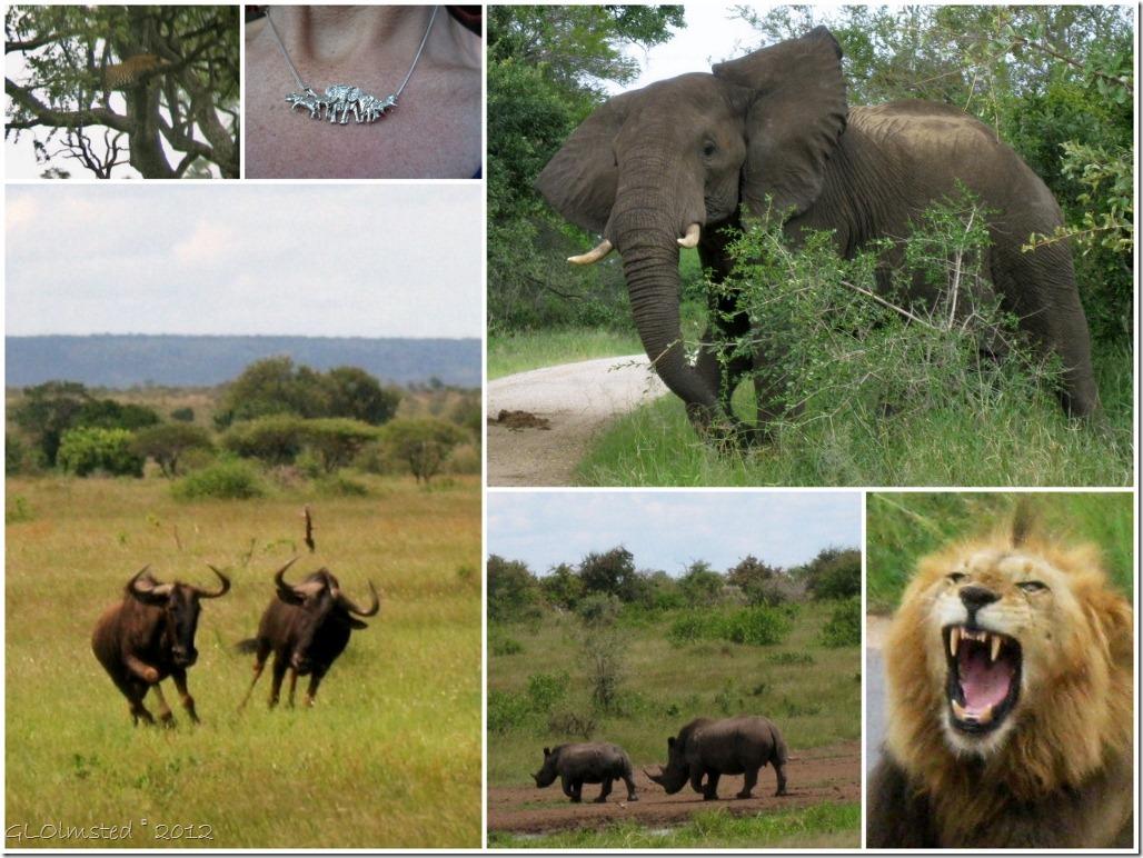 045 The Big 5 Kruger NP ZA 3-2010 (1024x768)