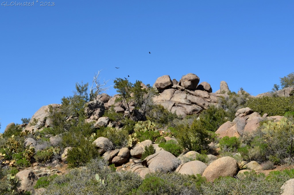 Turkey vultures soaring over Weaver Mts Yarnell AZ