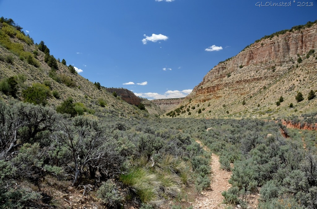 Snake Gulch trail Kanab Creek Wilderness Kaibab NF AZ
