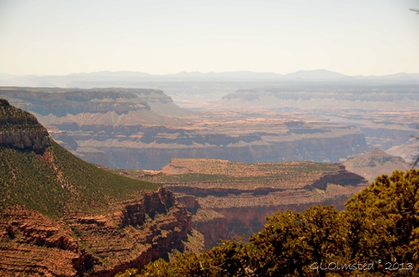 Grand Canyon Views From Timp Point In The Kaibab National