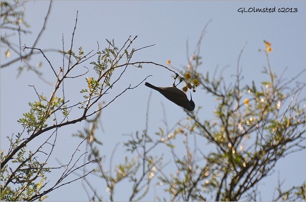 Sunbird along trail Warmwaterberg Spa Barrydale South Africa