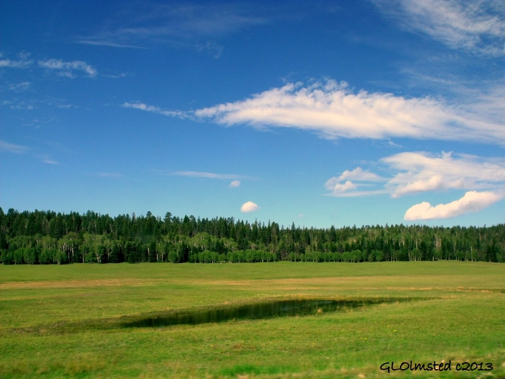 Water on the Meadows Kaibab National Forest Arizona