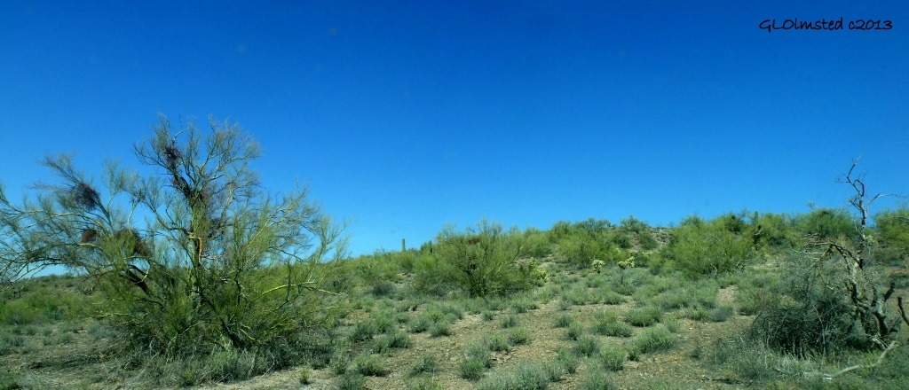 Palo Verde & saguaros BLM Vulture Mine Rd Wickenburg Arizona