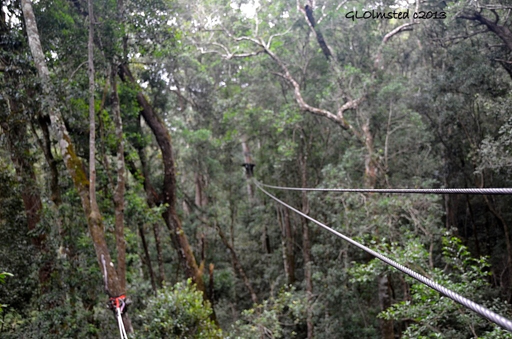 Zip-line Tsitsikamma Adventures Storms River South Africa