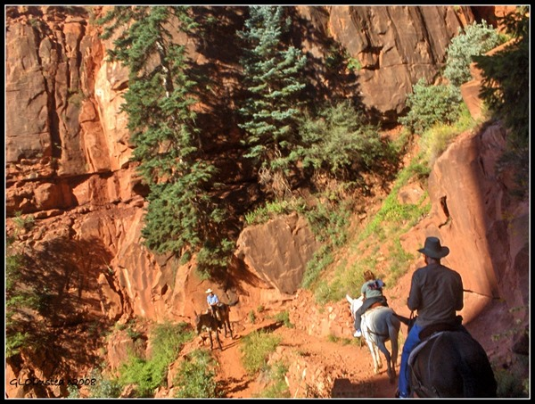 Riding mules on North Kaibab trail North Rim Grand Canyon National Park Arizona