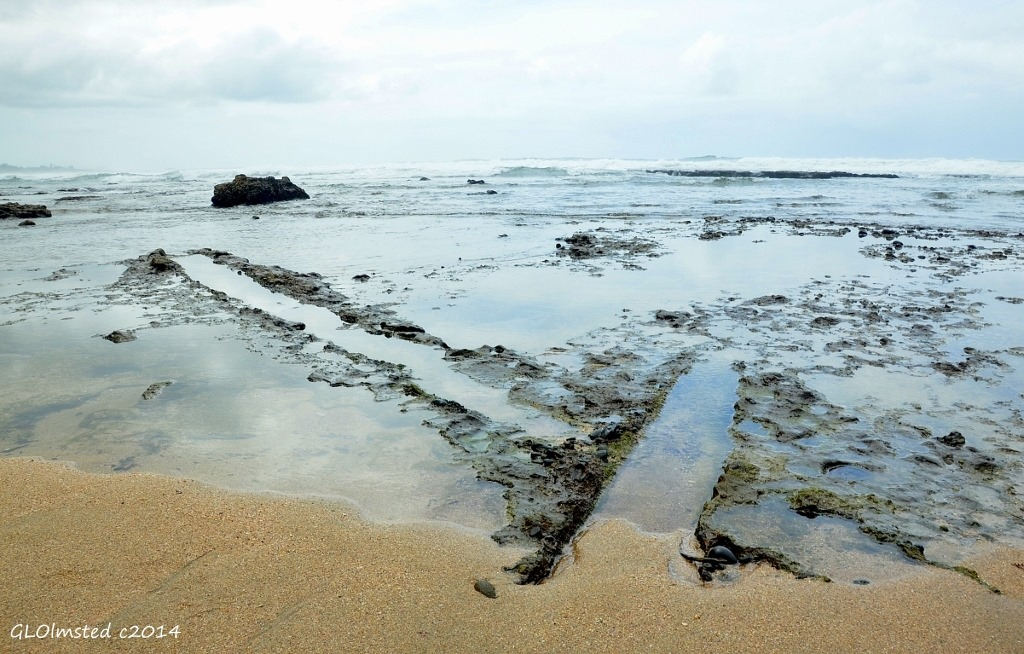Tree castings Mzamba Fossil site Wild Coast Sun Port Edward South Africa