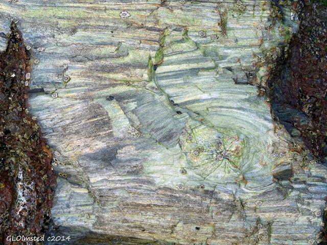 Fossilized wood Mzamba Fossil site Wild Coast Sun Port Edward South Africa