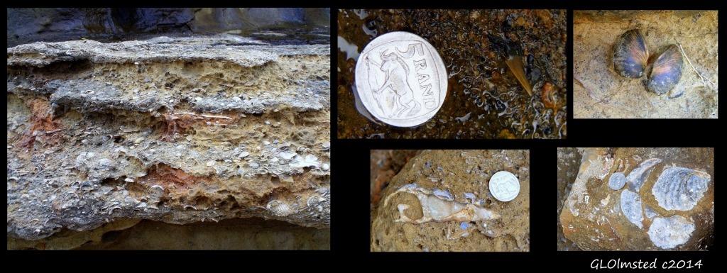 Mixed fossils Mzamba Fossil site Wild Coast Sun Port Edward South Africa