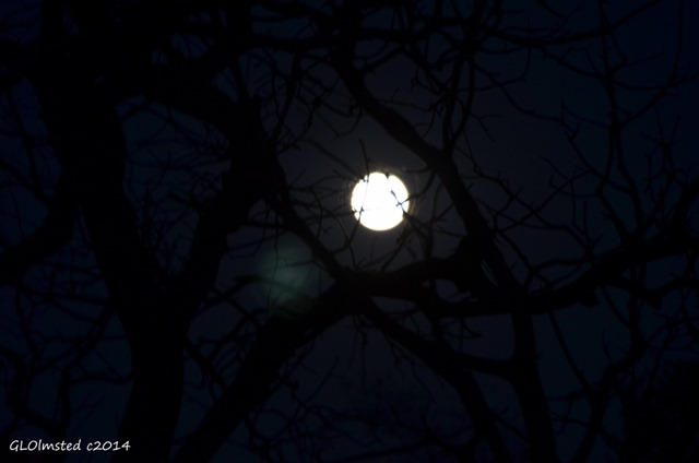 Full moon through trees Yarnell Arizona