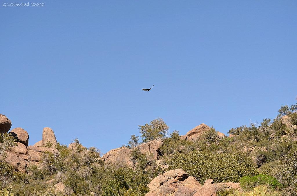 Turkey vultures soaring over Weaver Mountains Yarnell Arizona