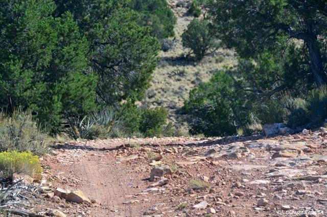 Rocky FR201 Kaibab National Forest Arizona