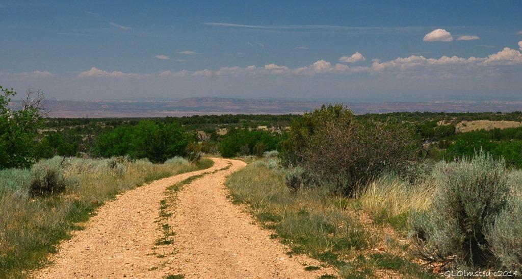 FR236 Kaibab National Forest Arizona