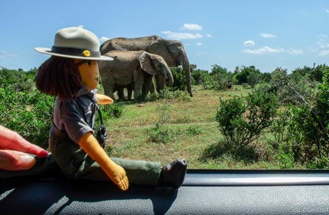 Ranger Wanda and elephants Addo Elephant National Park South Africa