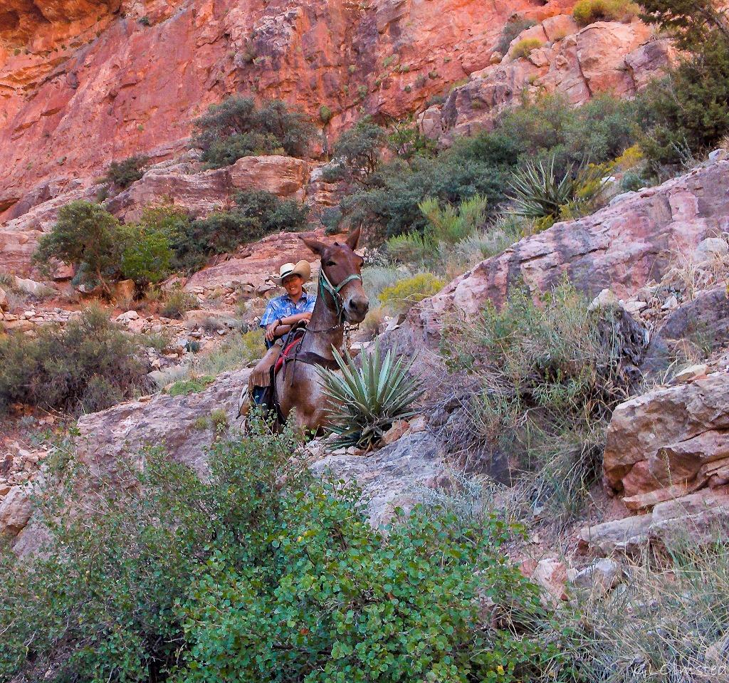 Lisa on mule North Kaibab trail Roaring Springs Canyon North Rim Grand Canyon National Park Arizona