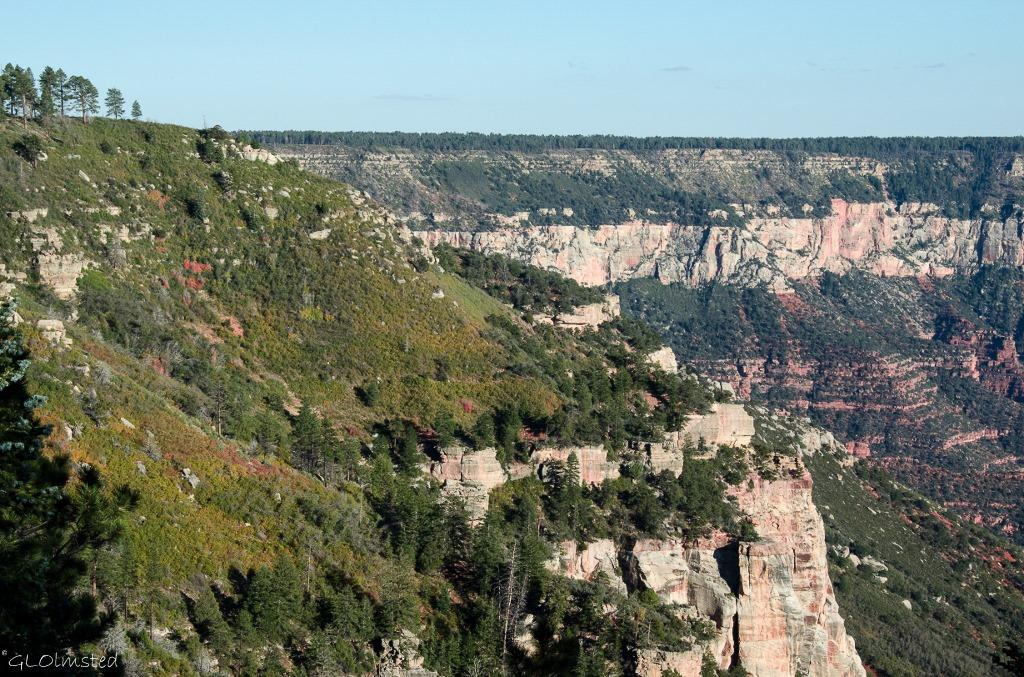 Fall color and canyon from Ken Patrick trail North Rim Grand Canyon National Park Arizona