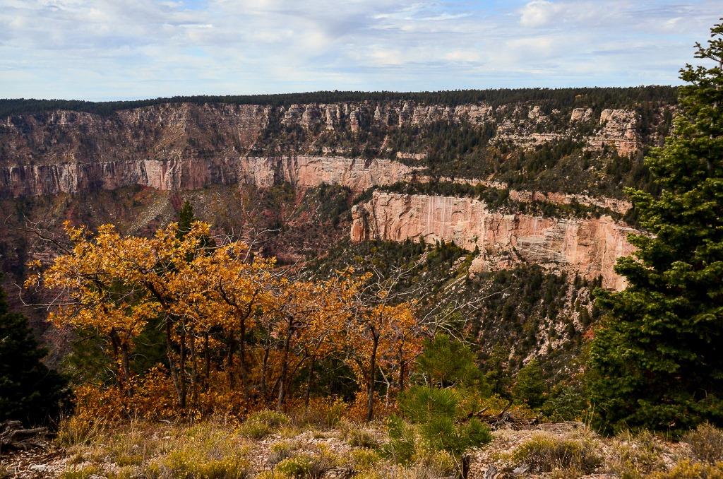 Fall oak & canyon North Rim Grand Canyon National Park Arizona