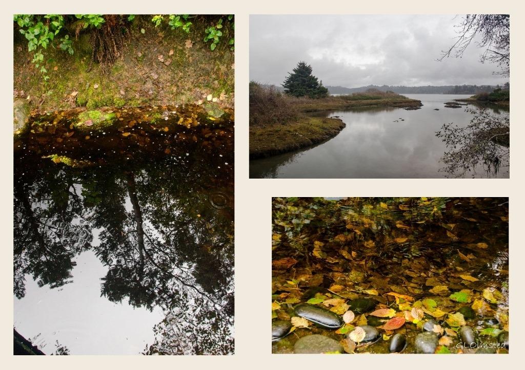 Forest reflection, fall leaves and estuary Oregon Coast Aquarium Newport Oregon collage