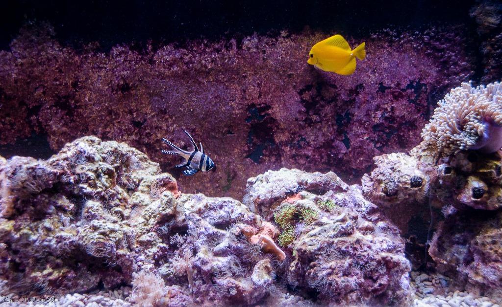 Fish swimming Oregon Coast Aquarium Newport Oregon