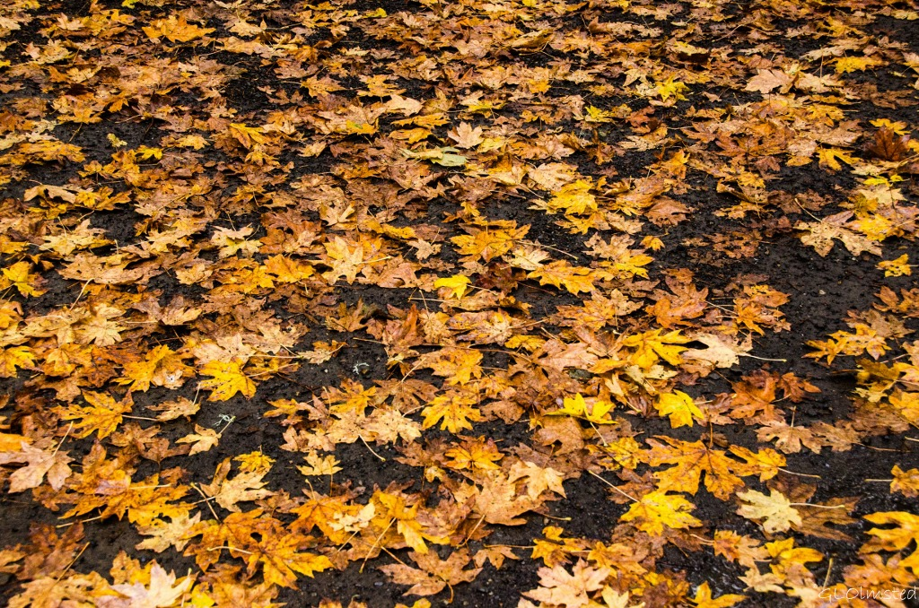 Fall leaves along Historic Columbia River Scenic Highway Oregon