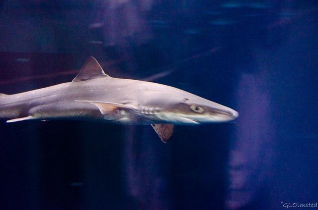 Shark Open Sea Passages of the Deep Oregon Coast Aquarium Newport Oregon