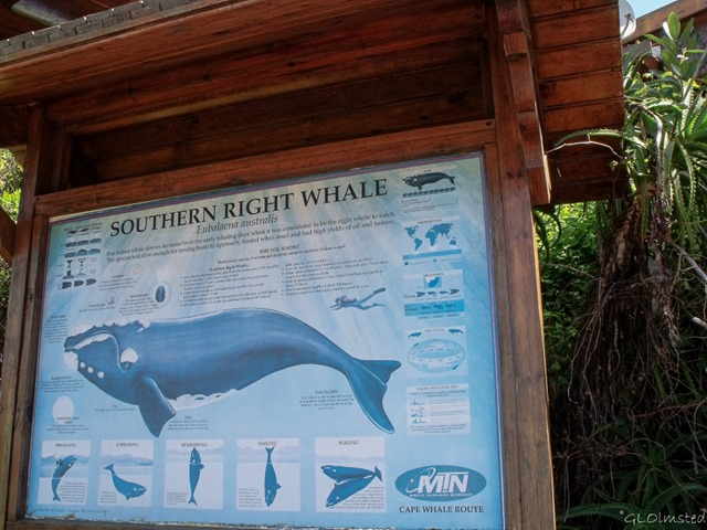 Southern Right Whale sign Tsitsikamma National Park Stormsriver Mouth Eastern Cape South Africa