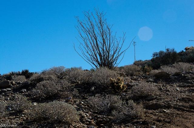 Yaqui Pass cg S2 Anza-Borrego Desert State Park California