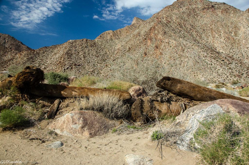 Palm trunks in wash Palm Canyon trail Anza-Borrego Desert State Park California