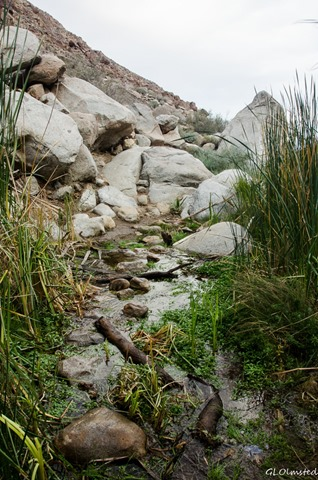 Stream crossing Palm Canyon trail Anza-Borrego Desert State Park California