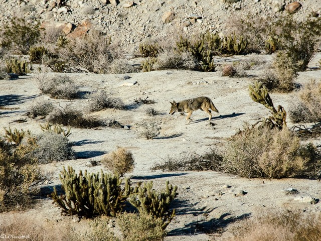 Coyote Mt Palm Springs Anza-Borrego Desert State Park California