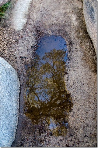 Reflection in puddle Barker Dam trail Joshua Tree National Park California