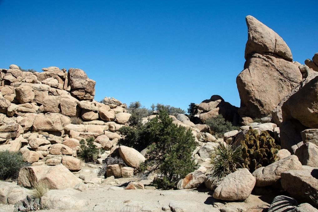 Dwarf Grumpy rock Hidden Valley Joshua Tree National Park California