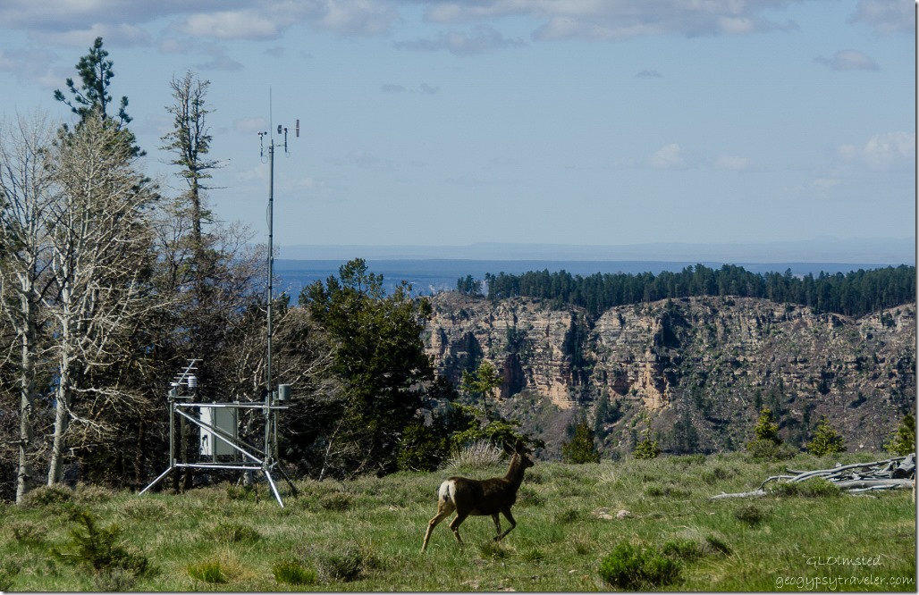 Mule deer from RV North Rim Grand Canyon National Park Arizona
