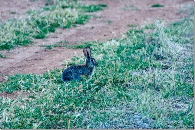 Rabbit Snake Gulch trail head Kaibab National Forest Arizona