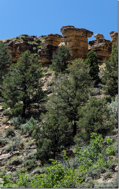 Rocky cliff top Snake Gulch trail Kaibab National Forest Arizona