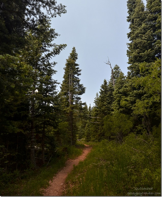Arizona Trail Kaibab National Forest Arizona