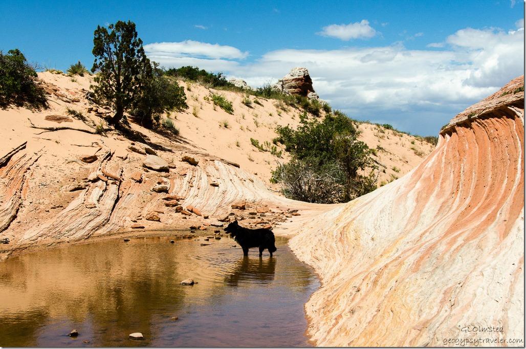 Sasha in water White Pocket Vermilion Cliffs National Monument Arizona