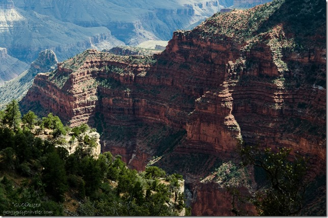 Late light on canyon walls Transept Trail North Rim Grand Canyon National Park Arizona