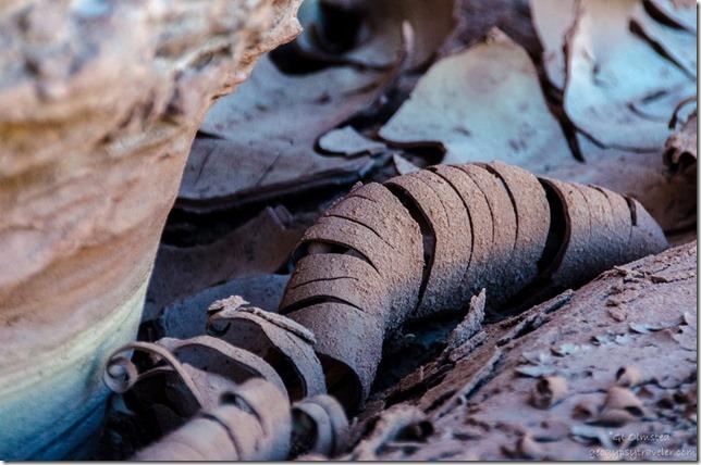 Curled cracked mud Upper Buckskin Gulch Paria Canyon/Vermilion Cliffs Wilderness area Utah