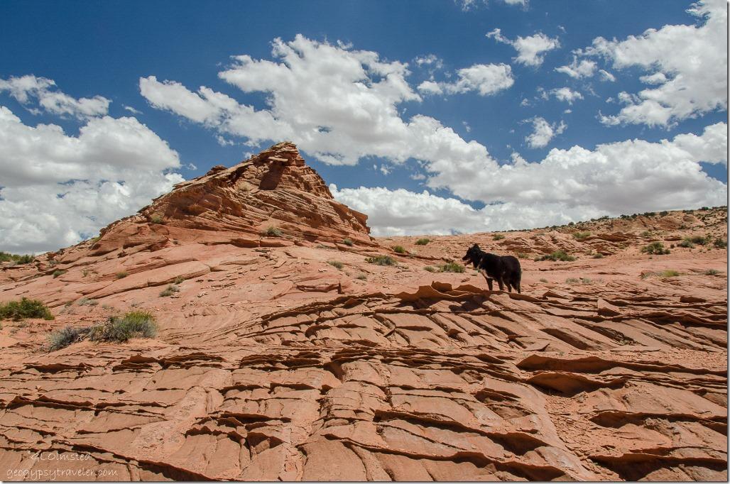 Sasha by sandstone fins Upper Buckskin Gulch Paria Canyon/Vermilion Cliffs Wilderness area Utah