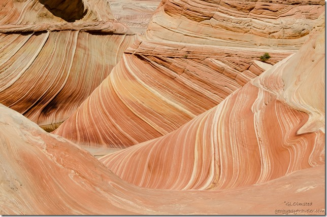 The Wave Paria Canyon-Vermilion Cliffs Wilderness Arizona