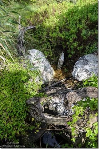 Creek Waterfall trail Tsitsikamma National Park South Africa