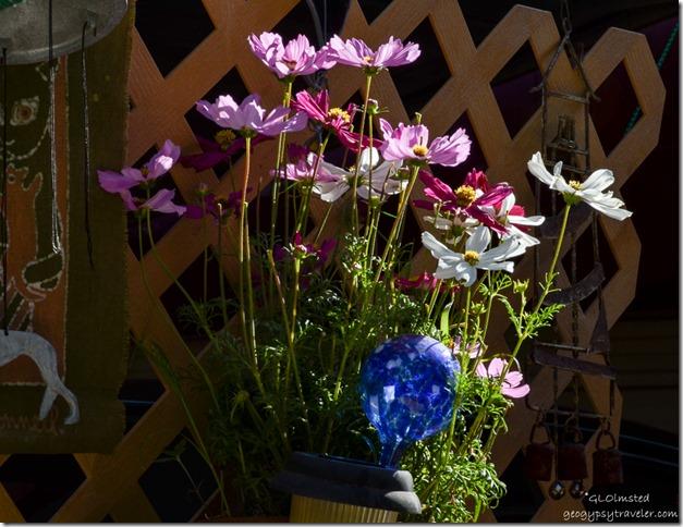 Flowers & stuff at Berta's place Yarnell Arizona