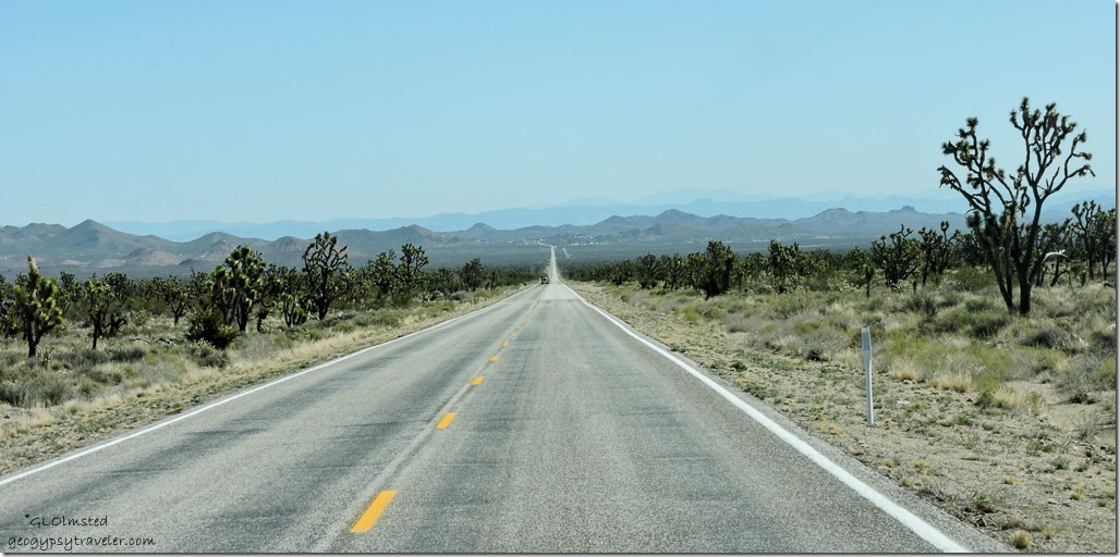 Joshua Trees SR 164 E Nevada